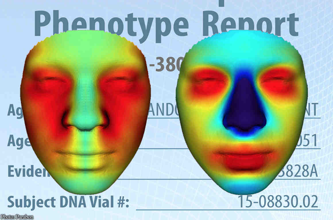 Computerized face reconstruction from Parabon report