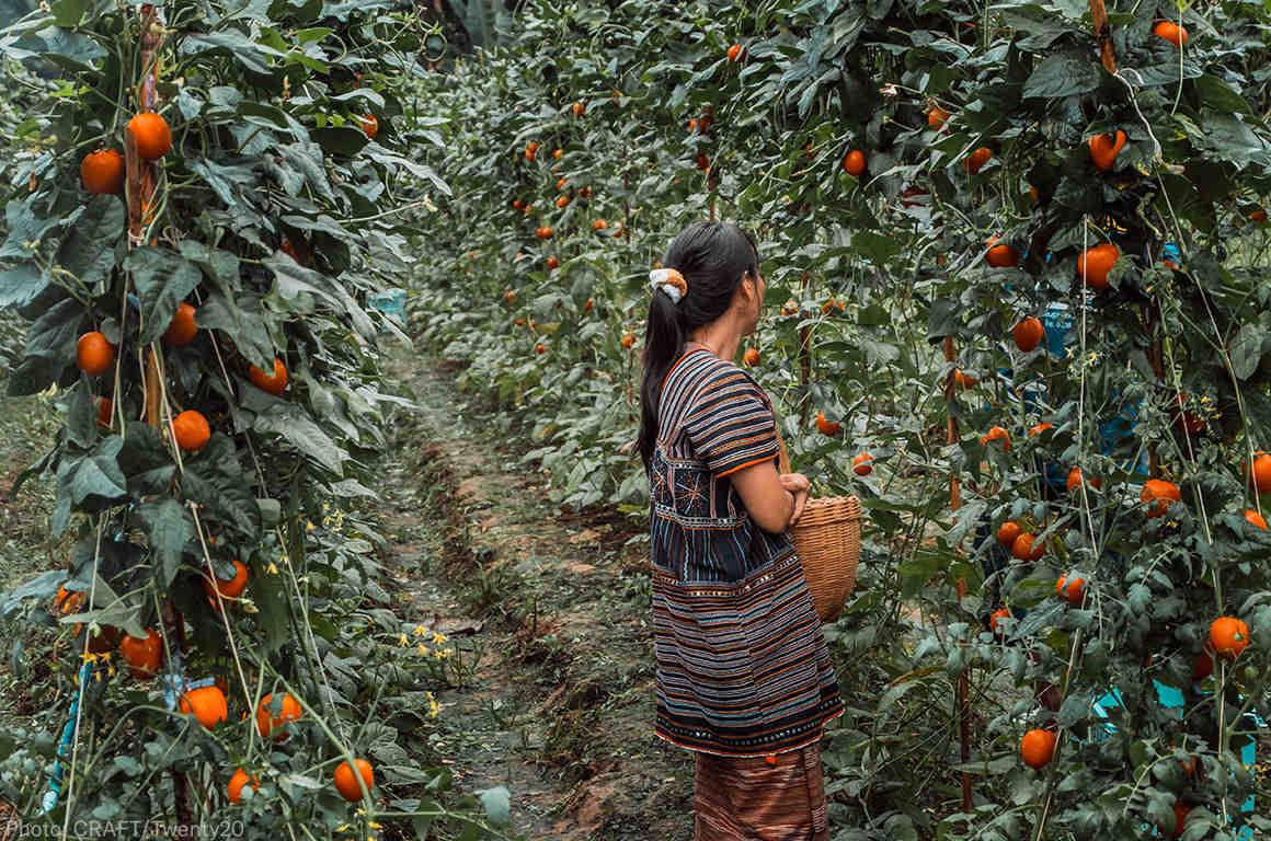A female farm worker